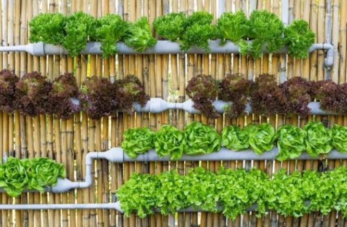 Вертикальная грядка для зелёных салатов