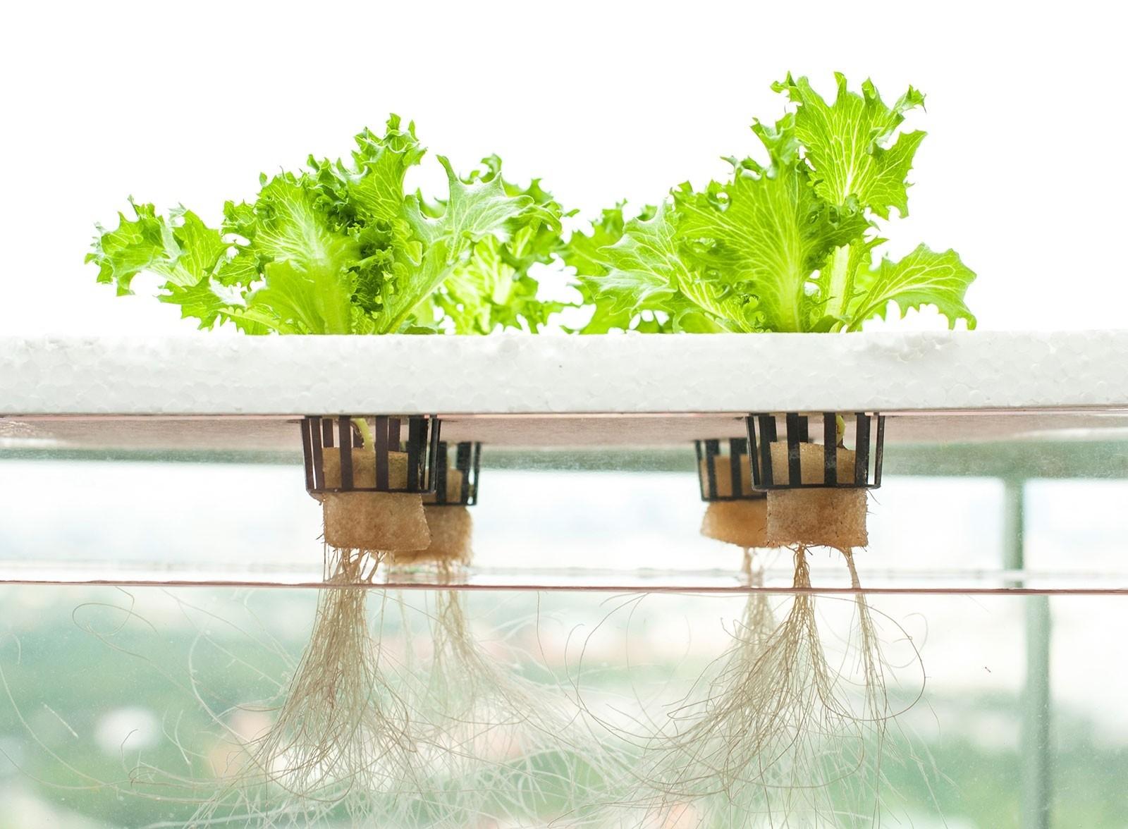 Гидропоника своими руками для салата с плавающей «поплавком» из пенопласта