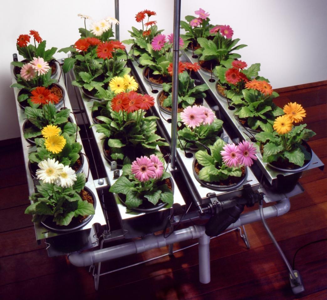Гидропонный метод применим и для комнатных растений