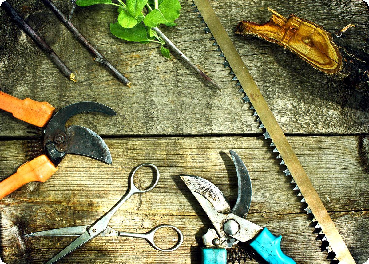 Дезинфекция садовых инструментов