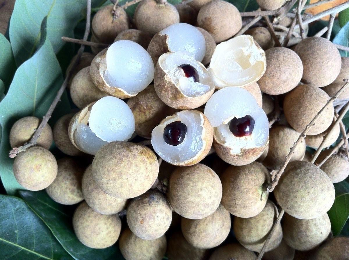 Лонган фрукт фото плодов, похожих на драконий глаз