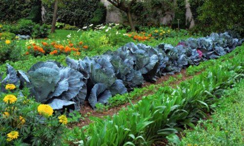 Огородная идиллия