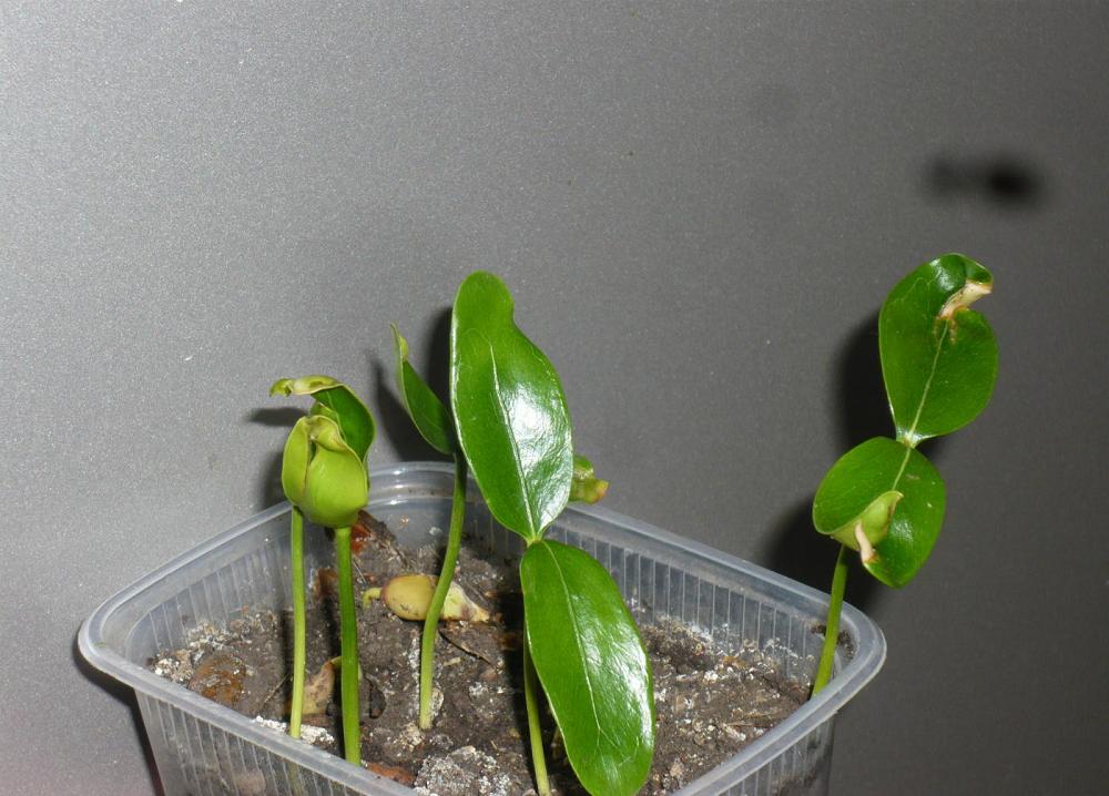 От ожогов особенно страдают молодые растения