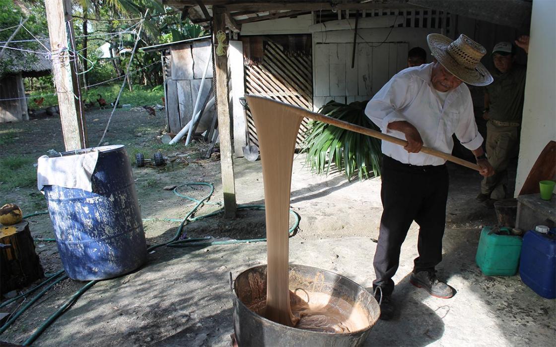 Производство жевательной резинки из саподилла