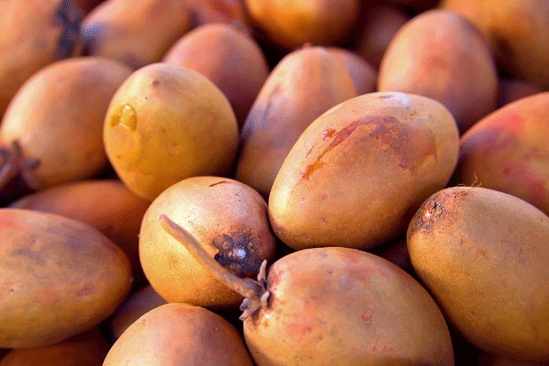 Саподилла фото спелых плодов