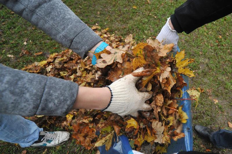 Уборка листвы после зимы на дачном участке