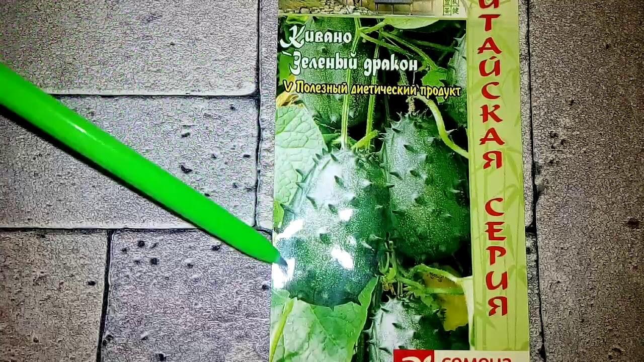 Семена кивано российской селекции
