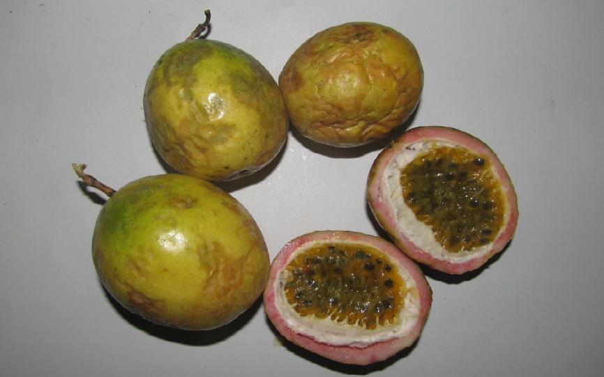 Эти плоды не успели созреть, но уже начали сохнуть и портиться