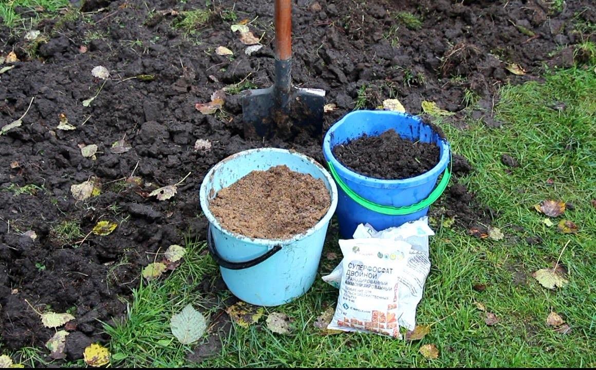 Подготовка грядок под батат – перекопка и удобрение почвы