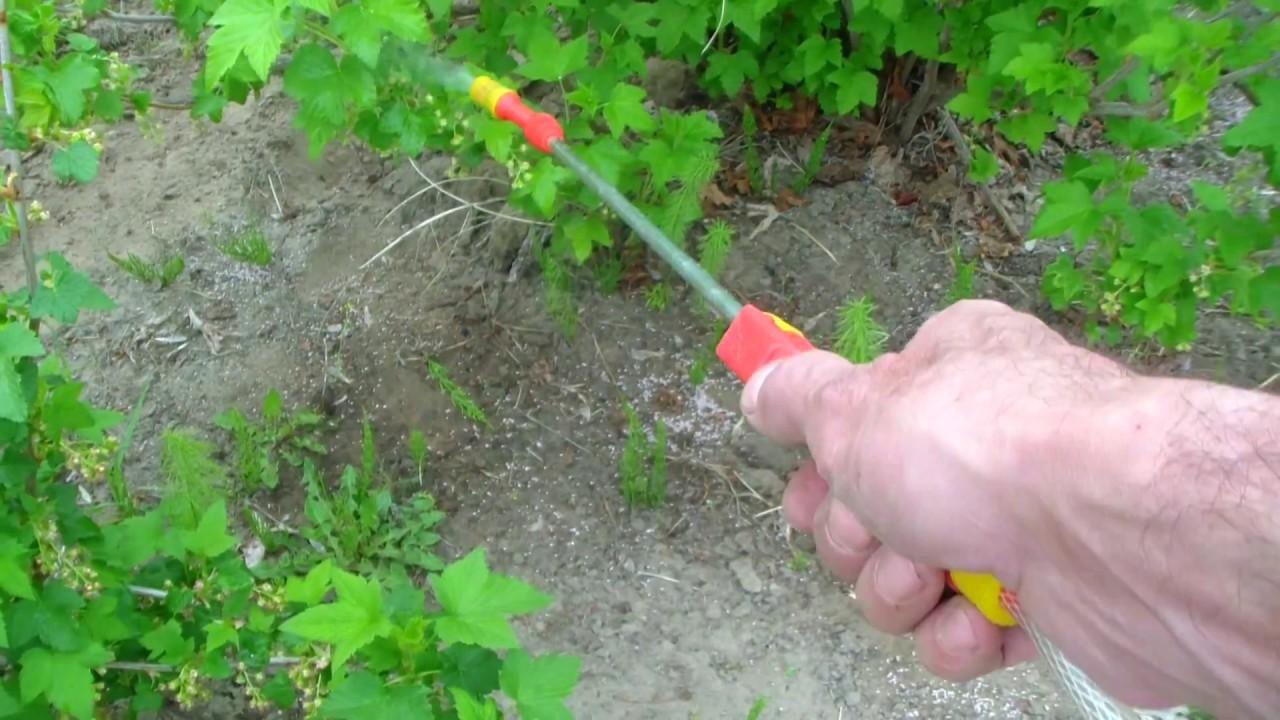 Для опрыскивания можно использовать любое распыляющее устройство