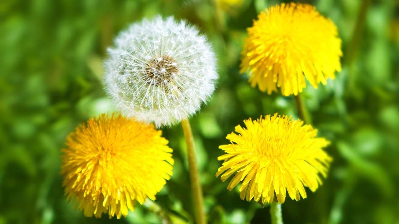 Каждое растение – источник тысяч семян