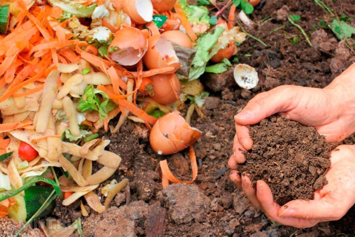 Прекрасное удобрение получается из скомпостированных кухонных отходов, скошенной травы и сорняков, пересыпанных землей