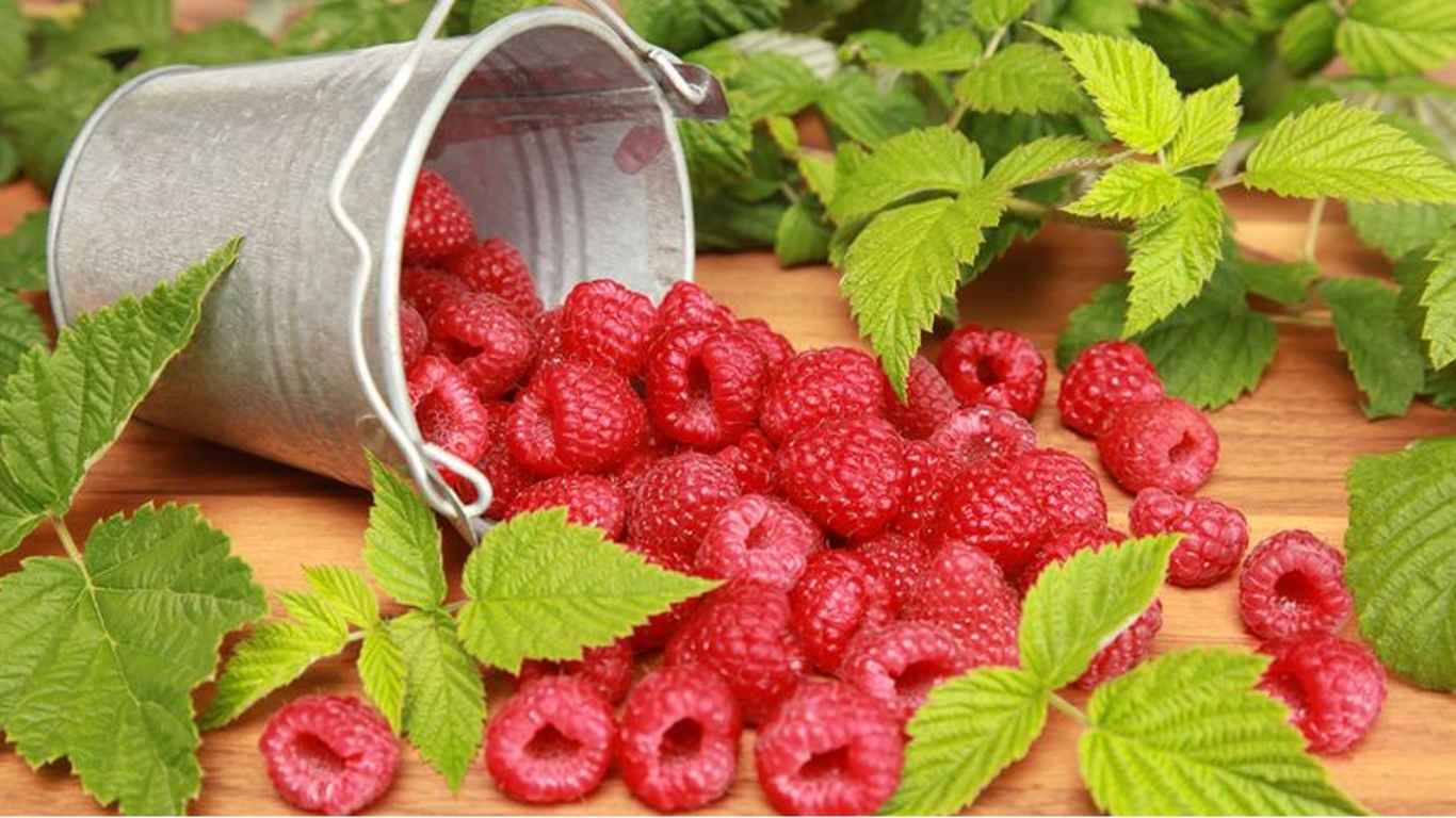 Удобрения для малины