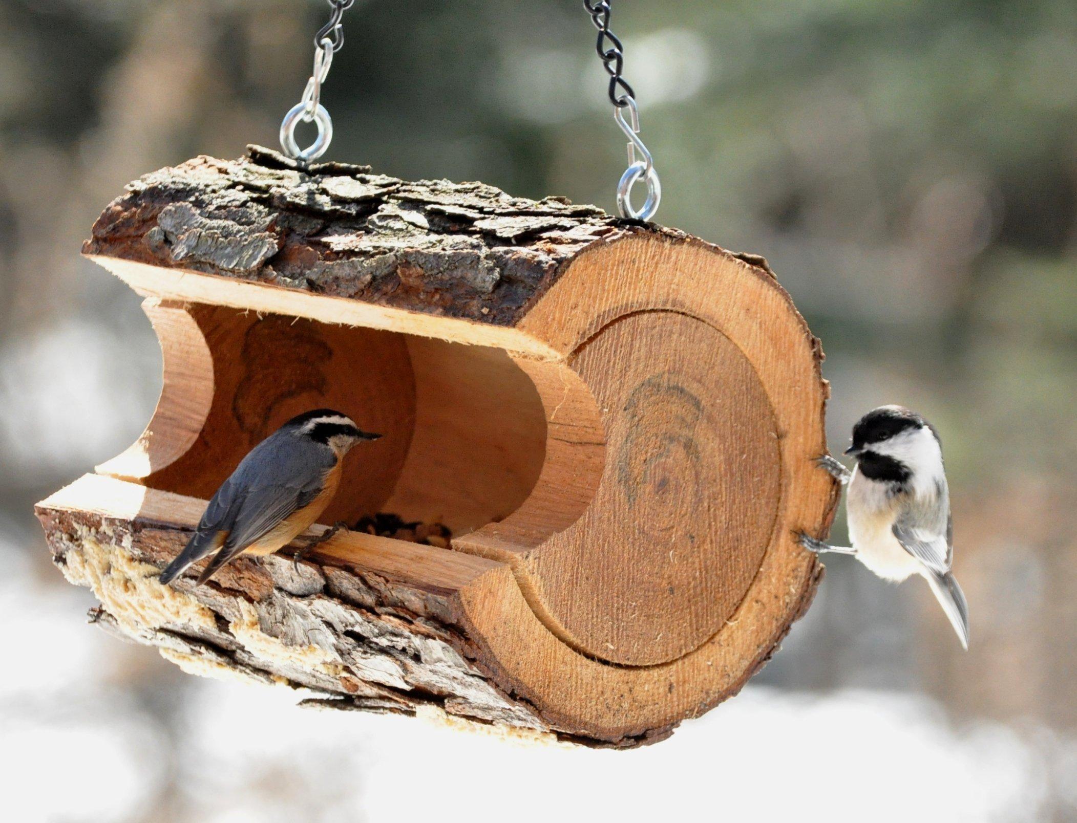 Мелкие птички – хорошие помощники в борьбе с насекомыми-вредителями