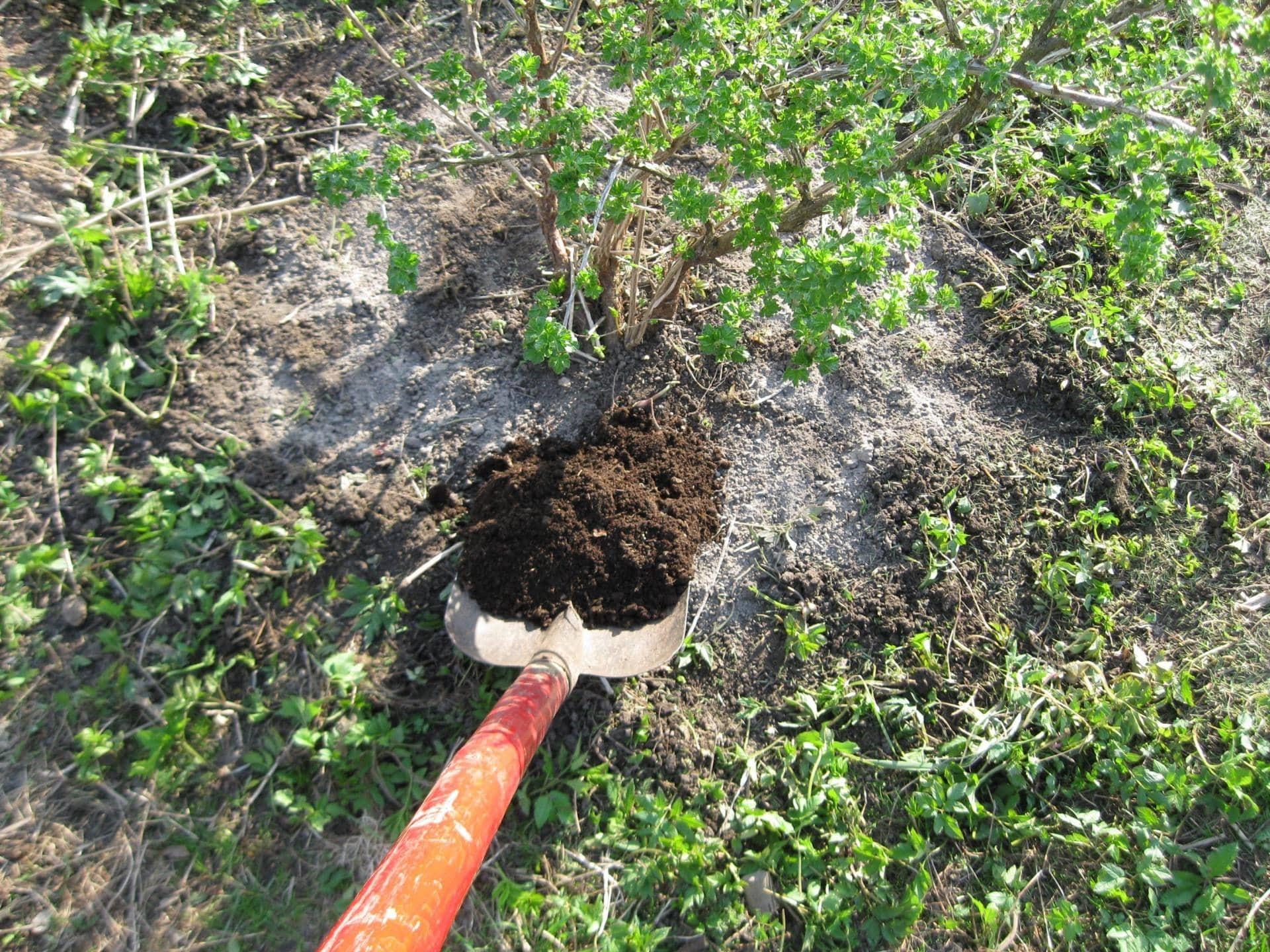 Мульча не даст дождям размыть удобрения и защитит корни от морозов