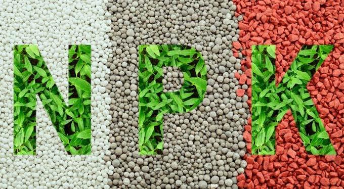 Основные элементы питания – азот, фосфор и калий