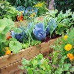 Подкормка растений летом