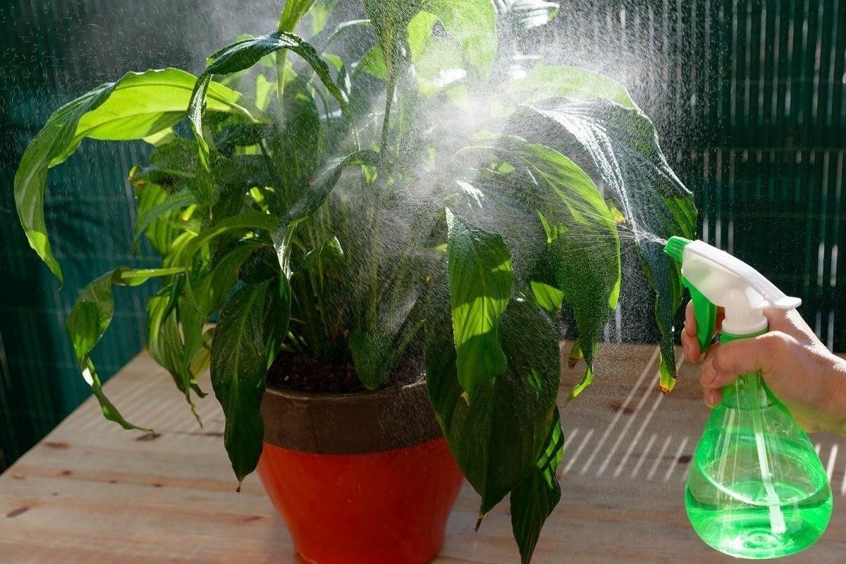 Спасти комнатные цветы от клеща помогает мыльный раствор