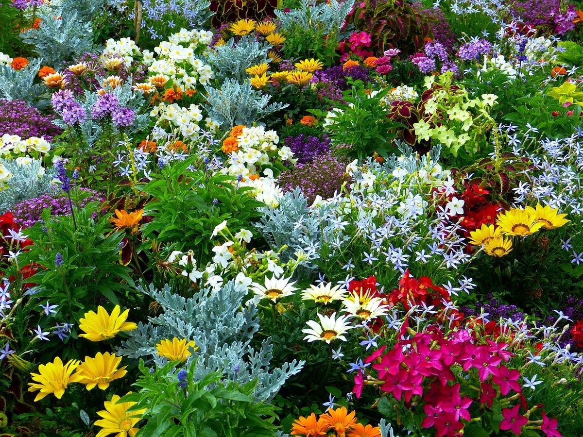 Цветы тоже нуждаются в подкормках
