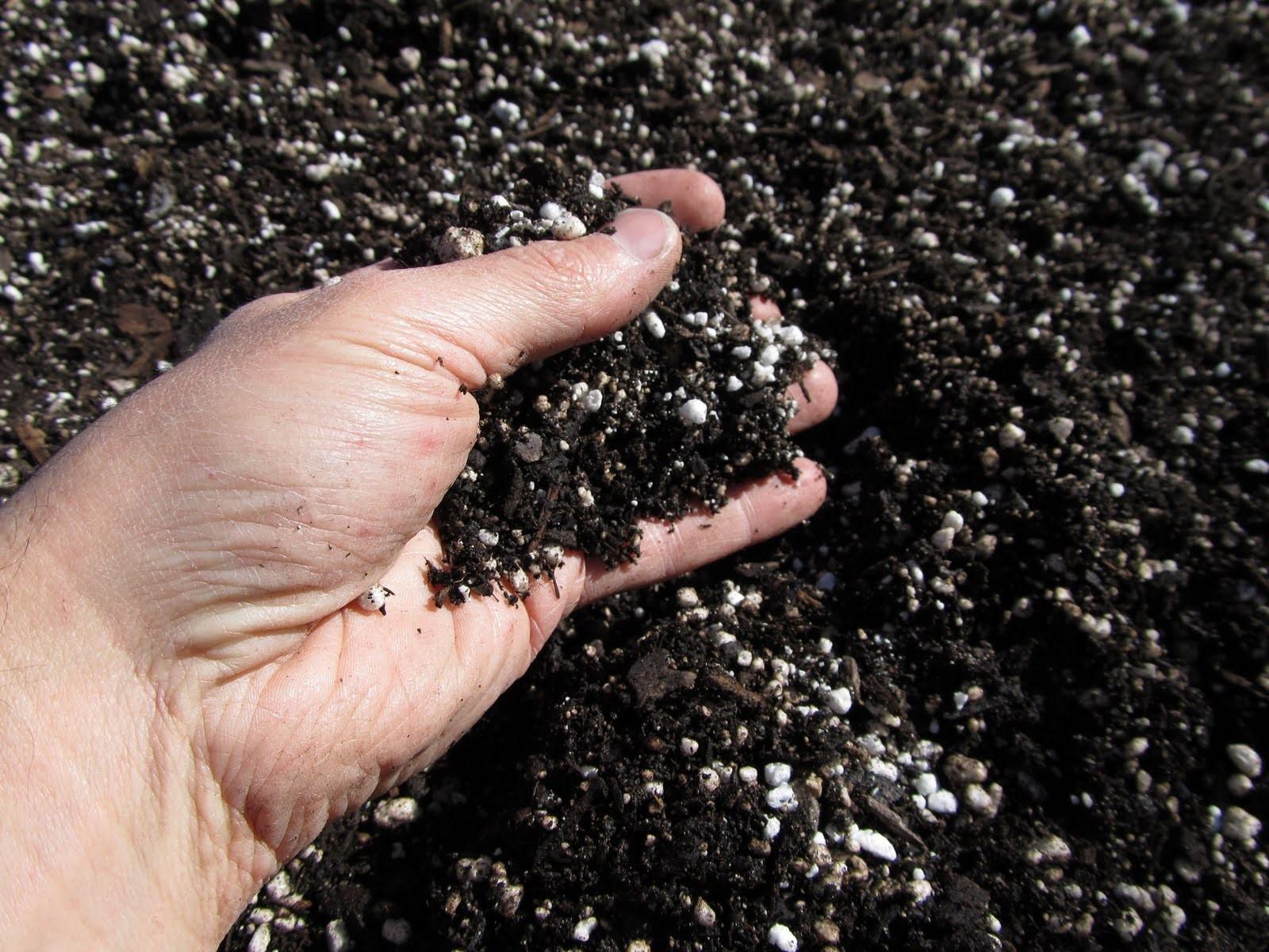 Перлит делает почву рыхлой и воздухопроницаемой