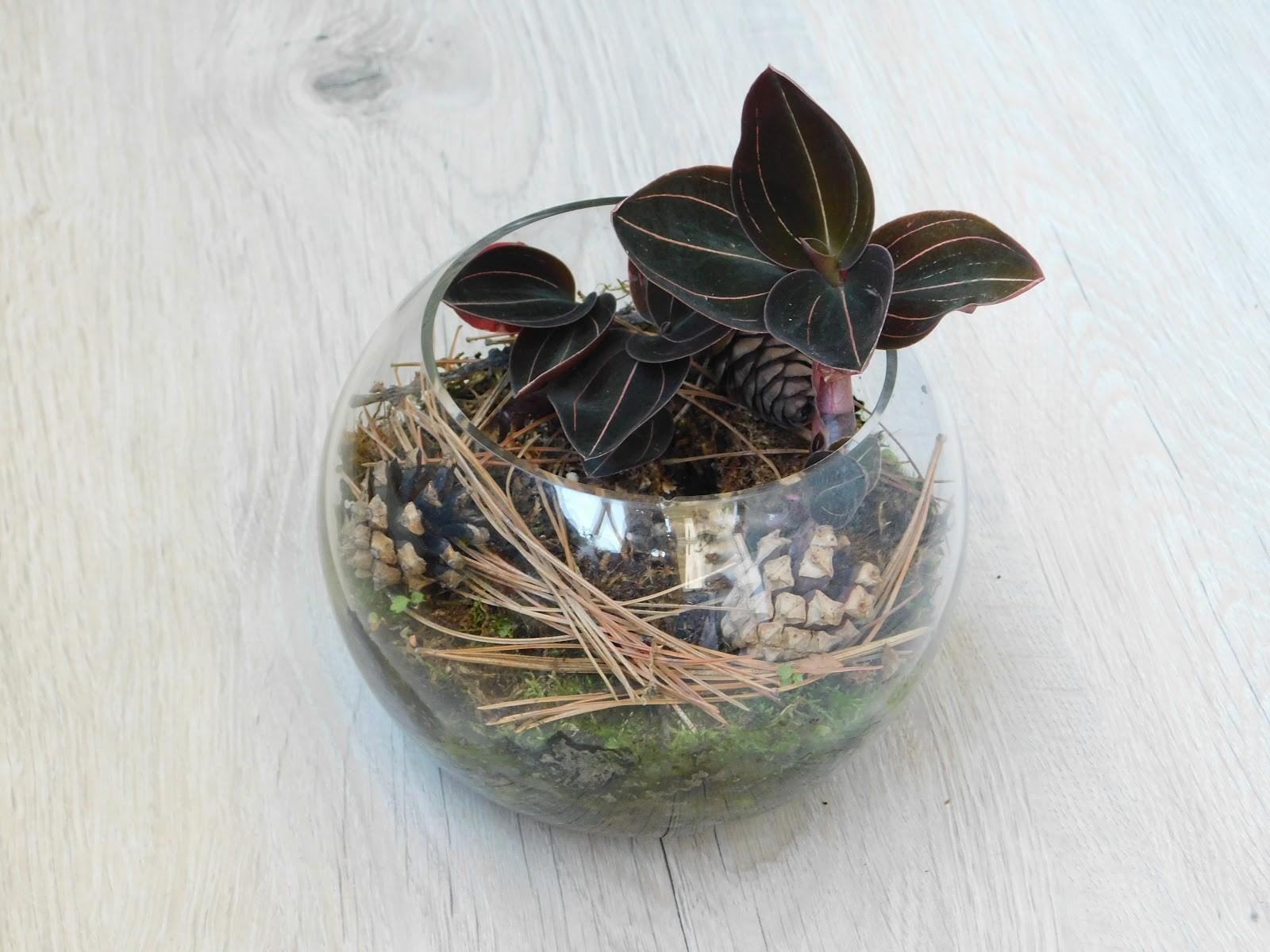При посадке во флорариум дренажный слой нужно делать высоким
