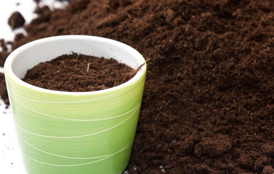 Можно использовать готовый грунт для цитрусовых