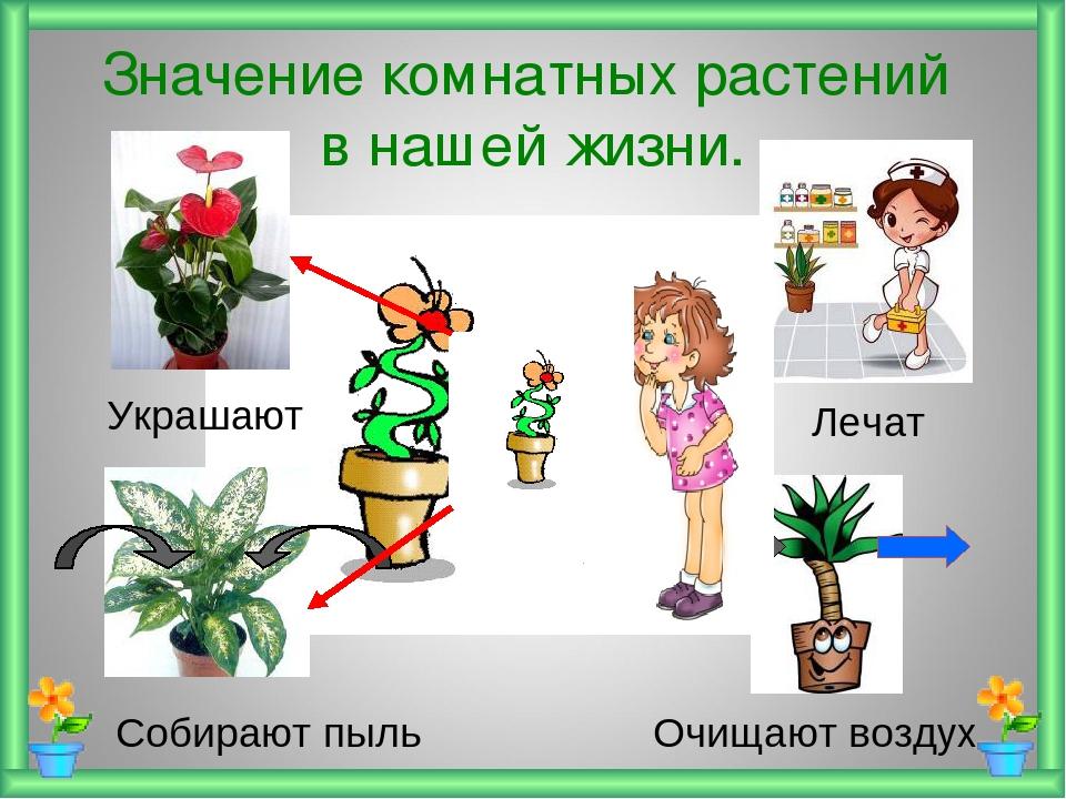 Польза комнатных растени