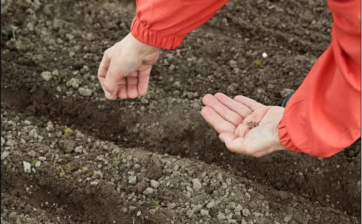 Семена должны упасть на сухую и холодную землю
